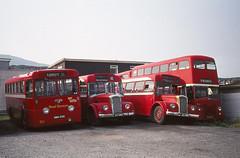 Isle of Man Road Services Dennis Falcons (Guy Arab UF) Tags: road bus buses tiger royal falcon 28 1956 29 dennis 93 90 isleofman services leyland ramsey 1952 strachan aldershotanddistrict psu113 por428 29hmn nmn908 28hmn tmn334