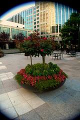 Centerpiece (Samm Osmolski) Tags: tree angle wide uptown shrubbery