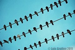 Birds on Wires (LouG_13) Tags: sky birds wire nikon florida feathers bluesky wires animalplanet southflorida d3000 grullon nikond3000 luisgrullon loug13