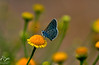 Butterfly { 3 / 3 } (nour alibrahim   نور الإبراهيم) Tags: butterfly photo nikon shot photos pic ibrahim noor نور nour صوره تصوير ورده مصوره طبيعه فراشه نيكون مصور مصورين زهره فوتوغرافي نورالبراهيم nouralibrahim
