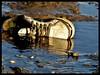 sapato velho (c.m.martins silva) Tags: portugal canon europe algarve 2012 madeinportugal ilustrarportugal