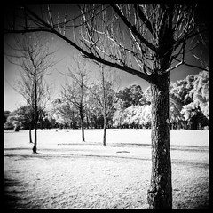 Neve no Ibirapuera? [Infrared] (k.jessen) Tags: brazil white branco brasil holga saopaulo sopaulo toycamera infrared infravermelho holga120n parqueibirapuera hoyar72 kodakd76 ibirapuerapark film:iso=400 kodakd76stock rolleiinfraredir400 developer:brand=kodak film:brand=rollei developer:name=kodakd76 rolleiinfraredir film:name=rolleiinfraredir400 filmdev:recipe=7844