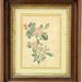 137. 19th Century Colored Print in Shadowbox Frame