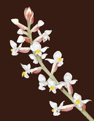 Orchid (sandy richard) Tags: gardens longisland plantingfields plantingfieldsarboretum sandyrichard sandrarichard