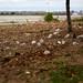 Hains Point Debris from Sandy