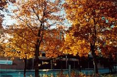 Minolta_011_30 20121013_12 Höst (Anders Wahlbom) Tags: autumn stockholm scanned kista shotonfilm minoltadynax5 kodakportra400