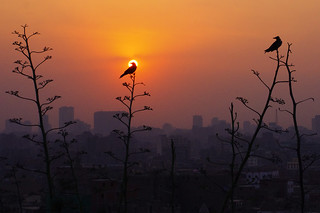 An Evening in Cairo, Egypt