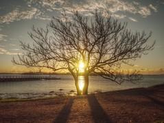like the first morning (EJLKSL) Tags: morning shadow sun tree beach sunshine clouds sunrise finland pier dock helsinki olympus shore kaivopuisto suomenlinna siluette epm1
