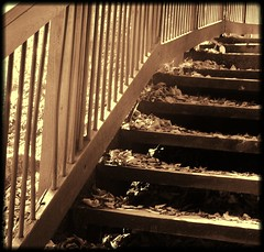 Swallow Falls SP ~ trail steps & fence (karma (Karen)) Tags: light sepia stairs forest woods shadows trails fences maryland squared hff lleaves garrettco mdstateparks fencefriday swallowfallssp