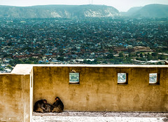 Homeless (Sumit-Gupta) Tags: houses sky india monkey nikon fort jaipur mountainrange d5100 nikond5100