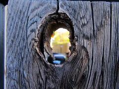 Knot Hole (a100tim) Tags: wood home yard gate knothole ansh scavenger17