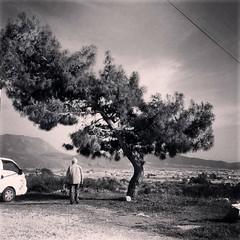 Cool tree (VillaRhapsody) Tags: man tree standing person ancient roman historical behind lycian preroman xantos challengeyouwinner likia kınık