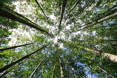 Bosque segoviano. (Rafa Velazquez) Tags: forest canon wideangle segovia turegano castillaleon