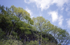 Pleasant Wind (vivafilmsky) Tags: sky cloud film nature japan forest forestry fujifilm konica