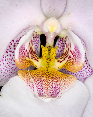 Orchid close-up (tresed47) Tags: flowers orchid macro us pennsylvania content places technical longwoodgardens folder ringflash takenby chestercounty 2014 peterscamera petersphotos canon7d 20140427longwoodgardensflowers