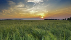 Sunset  Wheatfield (JodBart) Tags: sunset fields sky orange green clouds nature lanndscape billinge winstanley