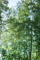 Sunken Woods II (shotreverseshot) Tags: wood water forest woods impressionist nrnberg reflexionen reflektionen nuermberg gehlz alterkanal refelxions impressionistisch ludwigdonaumainkanal ludwigskanal