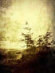 Vista (flowerweaver) Tags: trees brown yellow landscape adventure vista likeanetching