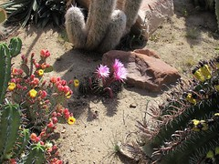 (shadowplay) Tags: cacti spring blossoms spines ranchito aguadullce