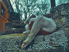 Cats Edition 7 - (34) (Robert Krstevski) Tags: pet cats pets animal animals cat fun kitten funny gators kitty kittens gatos gato kitties gata petlovers robertkrstevski robertkrstevskiblogspotcom