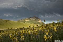 Crested Butte Wildflowers, Colorado (Bryan Maltais) Tags: colorado wildflowers sunset mountains crestedbutte rockymountains landscapes nikon d800