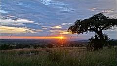 Sundown in Africa (tor-falke) Tags: africa sunset sky tree clouds landscape soleil nationalpark sonnenuntergang sundown himmel wolken afrika serengeti nuages landschaft sonne bume baum coucherdusoleil tansania africalandscape