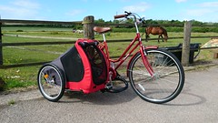 SamSum doggy sidecar (The bike guy !) Tags: england holland kinlan sequin larton wirral concept designed berkel aad bike bicycle sidecar doggie