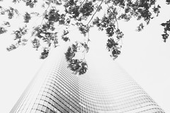 (Evelyn Schloff) Tags: city summer blackandwhite chicago building leaves architecture clouds exposure disappear