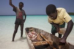IMG_5904 (Global Wildlife Conservation) Tags: cayemite coast haiti hispaniola june petitcayemite azure beach beauty blue boat boys coastal expedition fish horizon horizonoverwater island nature ocean sea twopeople