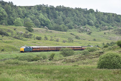 Deltic Class 55 007 'Pinza' southbound through Newtondale [NYMR] (soberhill) Tags: diesel gala pickering pinza grosmont nymr 2016 deltic northyorkshiremoorsrailway class55 newtondale royalscotsgrey 55022 55007