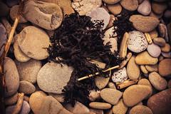 On the rocks (technodean2000) Tags: sea seaweed weed nikon rocks pebbles twigs d610
