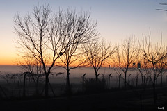 Amanece detras de los arboles (Gus@lc) Tags: naturaleza amanecer canong12
