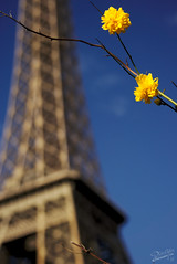 Early Spring (pieceyen) Tags: travel france paris tower eiffel gold champsdemars flowers
