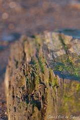 (Sous l'Oeil de Sylvie) Tags: sun macro sunrise soleil spring pentax bokeh pierre lichen tamron 90mm printemps moutains rocher 2012 pdc montagnes escapade leverdesoleil algues stlawrenceriver rivage k7 fleuvestlaurent isleauxcoudres avrilapril sousloeildesylvie