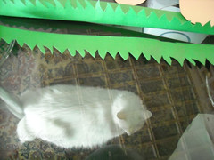 DSCN64163_miomicio_ (applecandy spica) Tags: white grass cat furry kitten chat soft handmade kitty fluffy cardboard colored katze fatcat chubby weiss gatto bianco blanc kittie ktzchen micio chaton gattino weis soffice peloso morbido gattone micetto micione gattochiatto