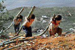 Tmore Kre, Kratie Province - The bamboos carriers (Mio Cade) Tags: boy girl work river kid cambodia child labor hill bamboo labour fetch carry province kratie kre tmore