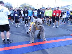 Head Start (Moondog Mascot) Tags: 100k moondog cavaliers beechbrook 04222012 fleetfeetsports5k