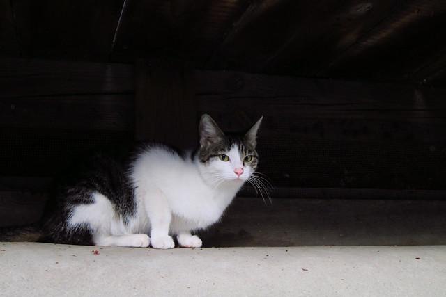 Today's Cat@2012-04-24