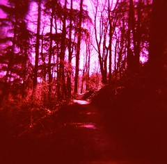 """Travel only by day. And stay off the road."" (liquidnight) Tags: pink trees shadow red sunlight colour film oregon analog forest mediumformat portland holga lomo xpro lomography crossprocessed woods fuji hiking quote path vibrant magenta fuchsia silhouettes surreal trail journey gandalf pdx dreamy lordoftherings tungsten analogue wilderness expired vignetting fujichrome forestpark fellowshipofthering redshift jrrtolkien 120n t64"