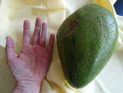 Avocado/abacate = 1,500Kg