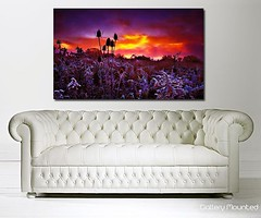 WINTER SUNRISE (Canvas Art Shop) Tags: flowers art floral wallart posters prints homedecor flowerart floralprints canvasart canvasprints flowerprints flowerwallart flowercanvasprints flowercanvasart