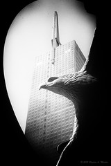 20120705_GablesTower_0097 (SteveMasker) Tags: city blackandwhite sculpture usa money reflection building bird tower art industry glass animal architecture modern america work vintage concrete liberty corporate freedom design justice dallas office downtown texas exterior eagle symbol steel united landmark patriotic business management national american commercial government soaring success financial pioneer finance thanksgivingsquare gablesrepublictower forevereagles