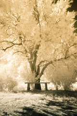 Growth (futhark) Tags: wood longexposure trees tree texture nature leaves vertical canon ir leaf madera long exposure mood angle natural personal wide banco bank evolution natura textures growth filter infrared domingo rama crecimiento hoya oriol ramifications ramas evolucion filtro irda r72 infrarrojo ramification 40d atmosphre orioldomingo orioldomingophotography