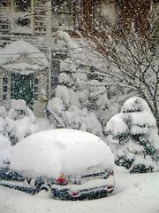 Snowed in! (Christine Allison) Tags: newyork nature transgender eunuch winterstorms citiebuildings firislan