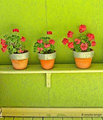 So simple so beautiful...In a cafe in Ioannina (amalia lam) Tags: flowers red green colors canon photography colours images greece pots simplicity minimalism geranium simple cafes nationalgeographic coffees ioannina epirus powershotg12