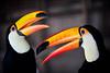 DSC_6904 (Pai Shih) Tags: bird animal flickraward5 flickrawardgallery gettyimagestaiwan12q3