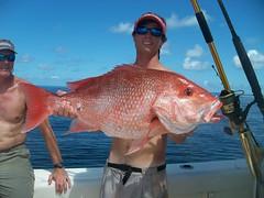100_1691 (Hollingsworth18) Tags: fish gulfofmexico fishing alabama pursuit redsnapper orangebeach saltwaterfishing pursuitboats