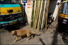 Hand | Bangalore (Arindam Thokder) Tags: street dog hand bangalore