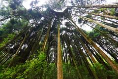 (Digital_trance) Tags: wood sky sun moon 20d nature forest sunrise canon landscape landscapes pond bush taiwan sigma  jungle   tadpole  nantou        70d  40d  canon40d 5dmarkii 5d2  5dii canon5dmarkii eos5dmarkii canon5d2 canon5dmarkiii 5d3 beautyoftaiwan canon70d 5diii