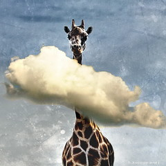 High (h.koppdelaney) Tags: life sky cloud art digital photoshop symbol head humor picture philosophy mind giraffe metaphor logos psyche overview symbolism psychology archetype intellect koppdelaney